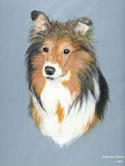 Tracy's adored Sheltie, Clair